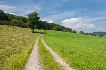 Документы для аренды земельного участка у администрации: как написать заявление на предоставление части лесного массива в государственной собственности?