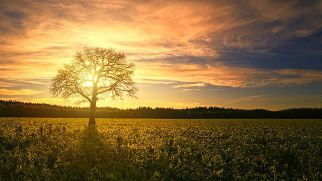 Земельный сервитут и земельное право: ст 274 ГК РФ, земельный кодекс, гражданский кодекс и закон о сервитуте, виды сервитутов в гражданском праве и понятие